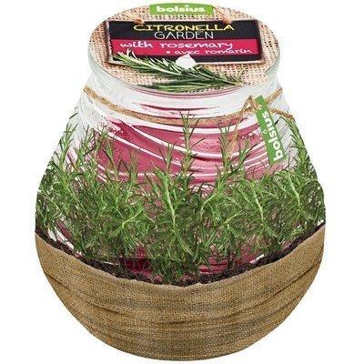 Bolsius outdoor scented candle Patio Light Windlight anti-mosquito - Citronella Rosemary